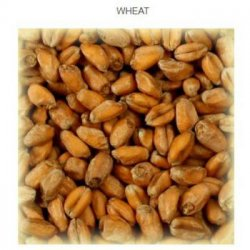 Wheat Malt blanc 3 EBC